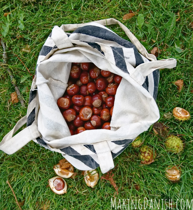 Collecting conkers fall activity